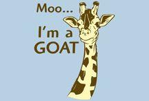 Giraffes :D