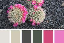 Côté couleur