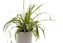 Plants - Indoor / by Frances Antila-Dyck
