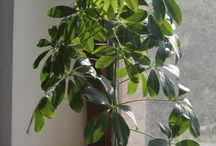 Szép szobanövények