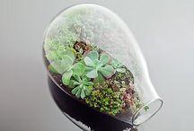 Paixão por plantas