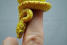 Hadi, žáby, obojživelníci - snake, frog, amphibian / Snake, Snakes, frog, frogs, amphibian