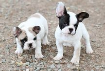 Frenchie love <3 / by Christa