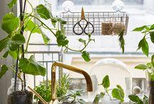 Plantes - Rebord de fenêtre