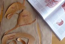 Homeschool  ~ Anatomy