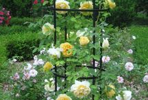 Another Rose Garden?