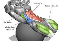 BODY MUSCLE