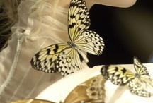 Butterflies and fairies