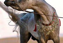 Horses/P