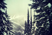 Idaho Skiing / Skiing in Idaho is not just potatoes, ski resorts like Sun Valley, Tamarack, Schweitzer, Brundage, Soldier, Bogus Basin, SIlver http://familyskitrips.com/rockies/idaho/brundage_cat_skiing.htm