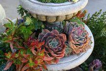 balcony-gardening