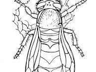 zviratá,hmyz