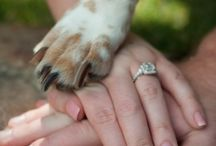 Must Love Dogs / Inspiration on how to make your 4 legged friend part of your big day!
