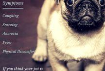 Doenças Animais
