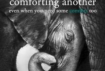Elephants / by Sharon Bippus