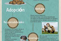 Compañeros de Vida / Crear conciencia en la responsabilidad que conlleva adoptar una mascota Recordar que es preferible adoptar en lugar de comprar una mascota Fomentar la cultura de esterilización tanto de nuestras mascotas como de las que no tienen hogar  Solidarizarse con los animalitos abandonados