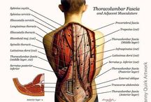 Vocabulary. Muscular System