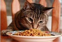 Kitty treat's