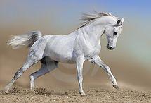 My Pretty Pony