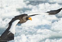 Hokkaido Wildlife Photography / Hokkaido Wildlife Photography #Hokkaido #Japan #wildlife #Birds #Cranes