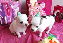 Birthday pics