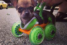 Cute special doggies / Van alles