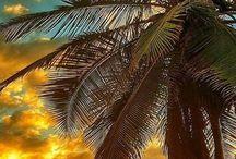 coco palme