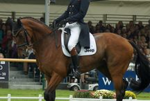 Burghley Horse Trials 2013 Dressage