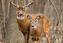 hunting / anything pertained to hunting