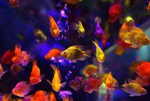 Sea Life - Sea creatures