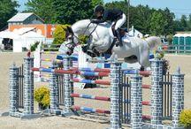 Emir Van De Helle / 2004 Holsteiner stallion by Caesar van de helle/ Cassini I stamm 2543
