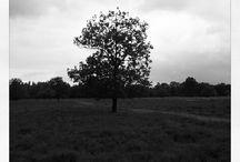 Foto: Eenzame bomen