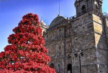 Oaxaca / Holidays, 2013.