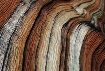 Alberi legno e corteccia.
