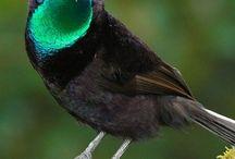 Birds / by Valmai Mc Queen