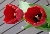 Flowers / by Mae C. Prado D.-