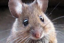 O Mouse (and the like)