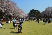Hanami 2015 / Zobacz jak przepięknie kwitnęła wiśnia w Japonii