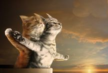 pisici dragute