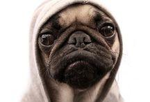 Mostly Pugs... / by Gabby Cavazos