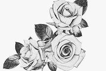 Roses/sketch  art