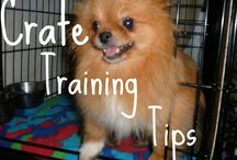 """Dog Training - Crate Training / Dog getting info mischief? Need a time-out? Do you need a restful sleep? If you answered """"Yes"""" to any of these questions, a crate trained dog may be just what you need.   Hope this information helps!!"""