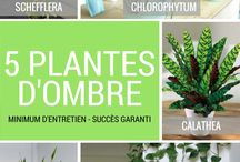 Jardin et plantes
