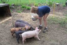 Farm animal raising info / by Wendy Binns