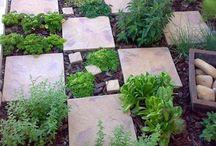 Gyógynövény és fűszerkert / Herbs garden / évelő növények kialakításával: petrezselyem, lestyán, menta, kapor, citromfű, tárkony (orosz), rozmaring, kövirózsa, és tavasszal magról ültetéssel: oregano, bazsalikom, metélő hagyma