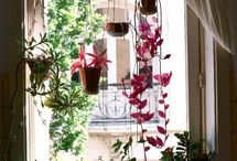 GARDENING: indoor / Tips, DIYs, Inspirational ideas for indoor plants and gardens.