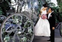 My Dream Wedding  / by Natalie Jewett