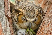 Owls / by Holly Lynn