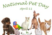 National Pet  Dayat wwwChloeCole.com / Happy National Pet Day #nationalpetday, #ChloeColePetCouture,