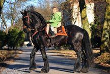 Horses/ HonkaDonks etc